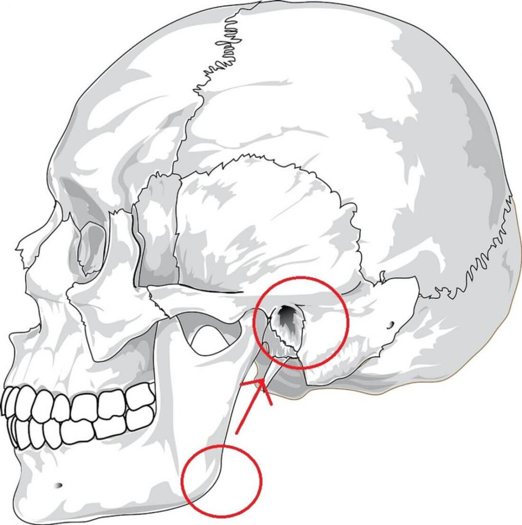 How Close Your Ears are to your Jaw